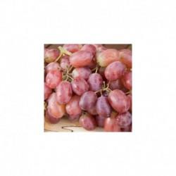 Grafted Grapevine 'Crimson Seedless'